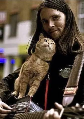 等了两年终于来了!11月档最高口碑电影就是这部《流浪猫鲍勃》!