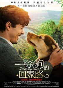 [一条狗的回家路|A Dog's Way Home][2019][1.93G]