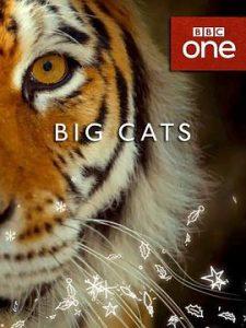 [大猫|Big Cats][2018]